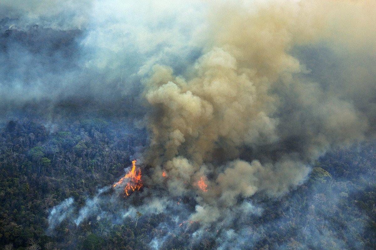 Levantamos la voz por el Amazonas: Pronunciamiento del CELAM